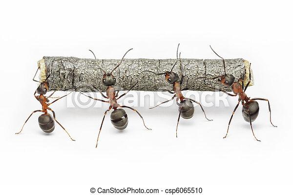 工作, 螞蟻, 配合, 日誌, 隊 - csp6065510