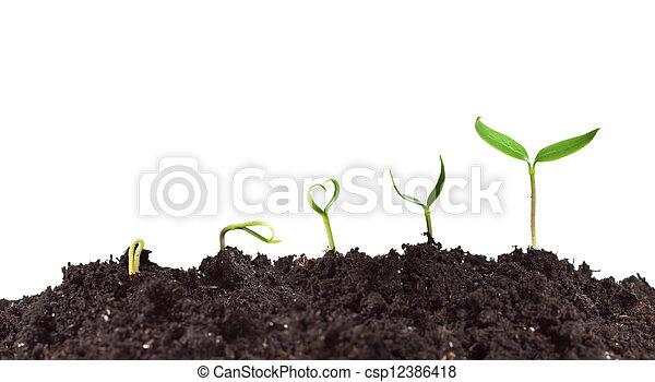 植物, 成長, 萌芽 - csp12386418