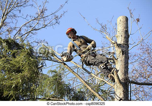 樹木栽培家, 切, 樹 - csp8096325