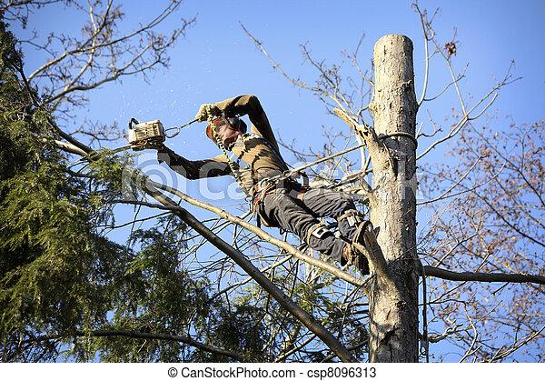 樹木栽培家, 切, 樹 - csp8096313