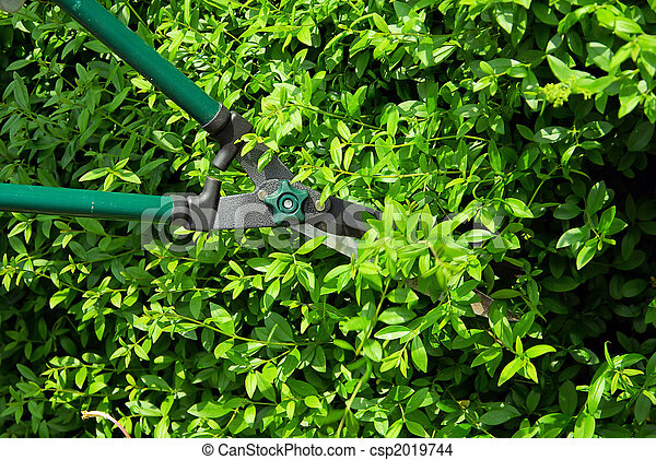 樹籬, 傷口, 05 - csp2019744