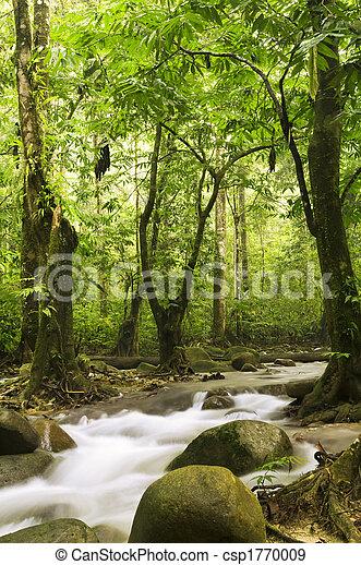 河, 森林, 綠色 - csp1770009