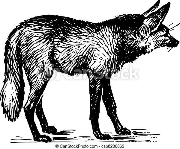 狐狸 - csp8200863