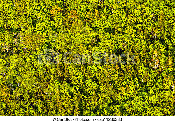 看法, 樹, 魁北克, 空中, 加拿大, 綠色的森林 - csp11236338