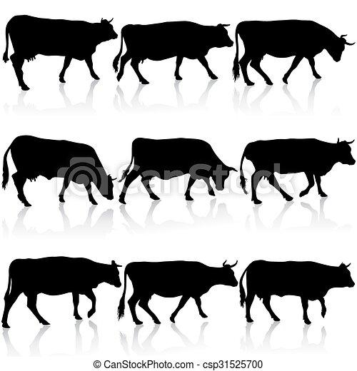 矢量, cow., 黑色, 黑色半面畫像, 彙整, illustration. - csp31525700