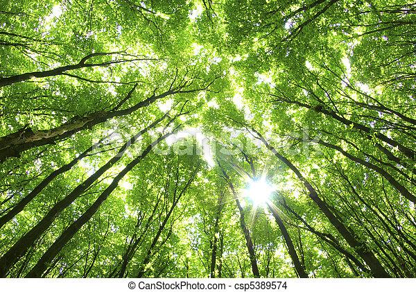 背景, 格林樹 - csp5389574