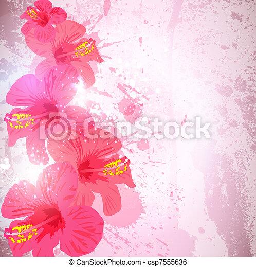 芙蓉屬的植物, 花, 摘要, 熱帶, 背景。, design. - csp7555636