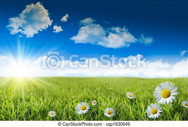 藍色, 野生的青草, 天空, 雛菊 - csp1630649
