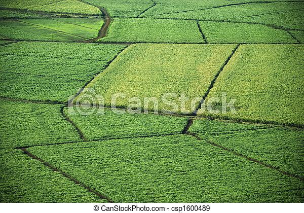 fields., 空中, 庄稼 - csp1600489