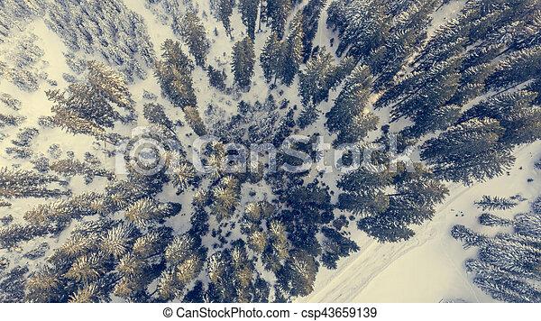 forest., 看法, 冬天, 空中 - csp43659139
